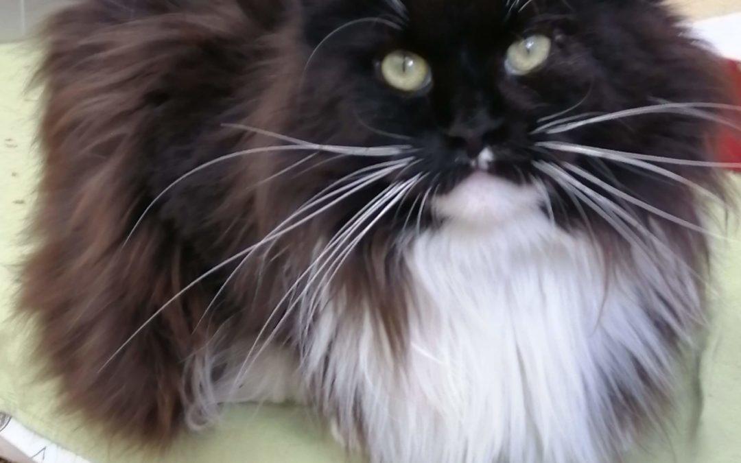 Les moustaches félines