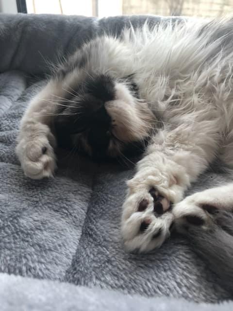 Rêves de chat
